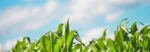 Afbeelding van grassen
