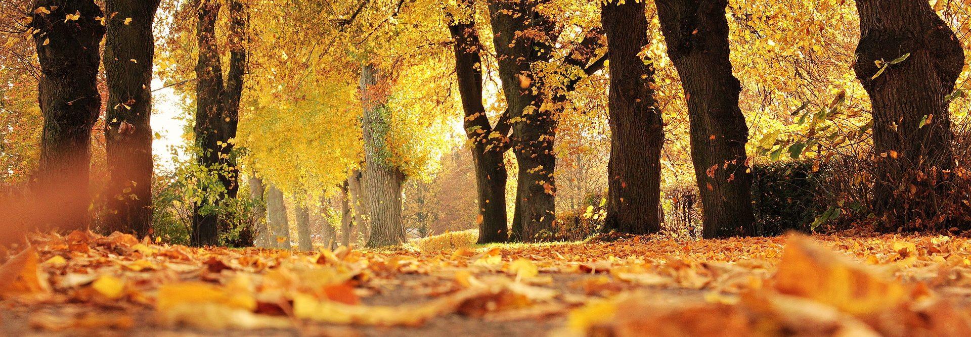 header foto van bomen tijdens de herfst